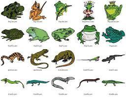 Más de 25 ideas increíbles sobre Animales anfibios en ...
