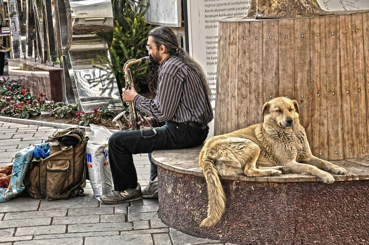 musician and the dog...