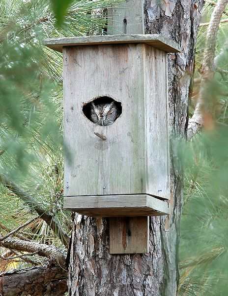 Best 25+ Owl house ideas on Pinterest | Owl box, Owl nest ...