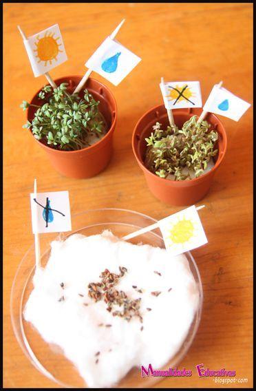 Manualidades Educativas: Botánica Montessori - Las Necesidades básicas de las Plantas