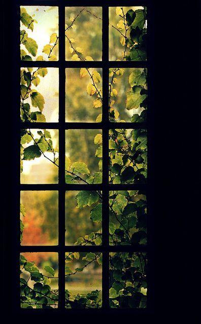 É quase Outono e os jardins pedem atenção!