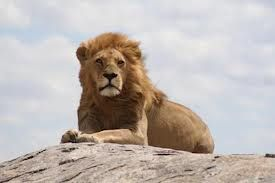 On this singles vacation we will take in the wonders of the amazing Ngorongoro Crater, the world famous Serengeti National Park, and the tree climbing lions of Lake Manyara, ending on the exotic island of Zanzibar.