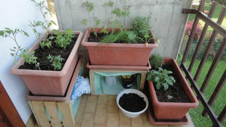 esperimenti 'orto sul balcone'