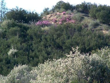 garden ridge scrubs. simple erosion control for a hillside or garden slope. things to look before you even start on garden, landscape slope wild hillside. ridge scrubs