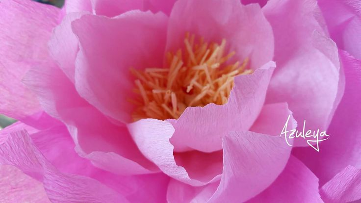 I nostri fiori in carta ......curatissimi e dai colori spettacolari