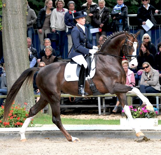 Anna Sophie Fiebelkorn rides Callaho's Benicio in the Bundeschampionate 2011, a German competition for young dressage horses. In only his third show, this stallion shows a lot of promise!