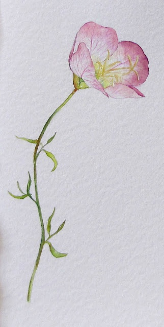 Water color flowers to paint