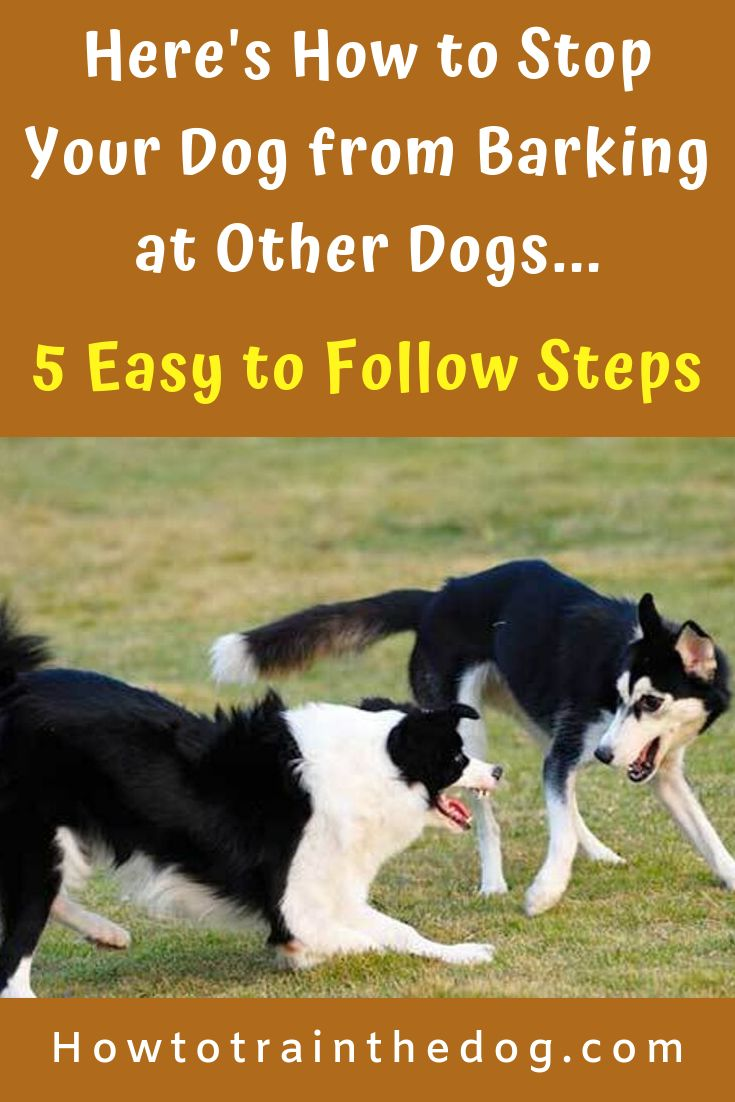 How to stop your dog from barking at other dogs 5 tips