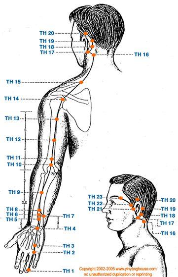 El Meridiano del Triple Calentador se mantiene íntimamente asociado a las funciones de la tiroides