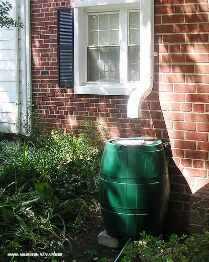Here's a great article on how to use rain barrels to save water, including prep, placement and how to keep pests out