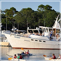Our Cur Top 3 Dolphin Eco Tours In Hilton Head