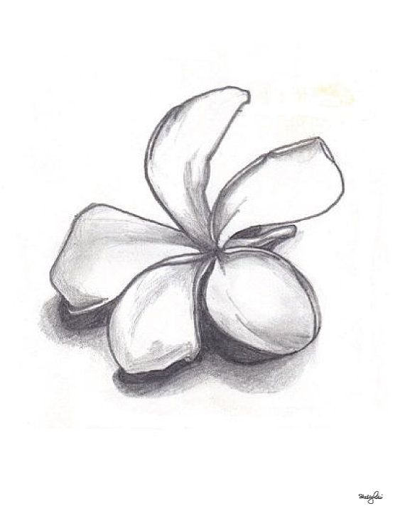 Single Plumeria Pencil Drawing Fine Art Flower by GreenBomb, $20.00