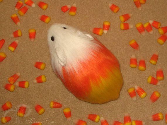 Little Candy Corn Guinea Pig