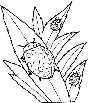 19 Best Ladybugs Coloring Book Images On Pinterest Coloring Ladybug Coloring Page