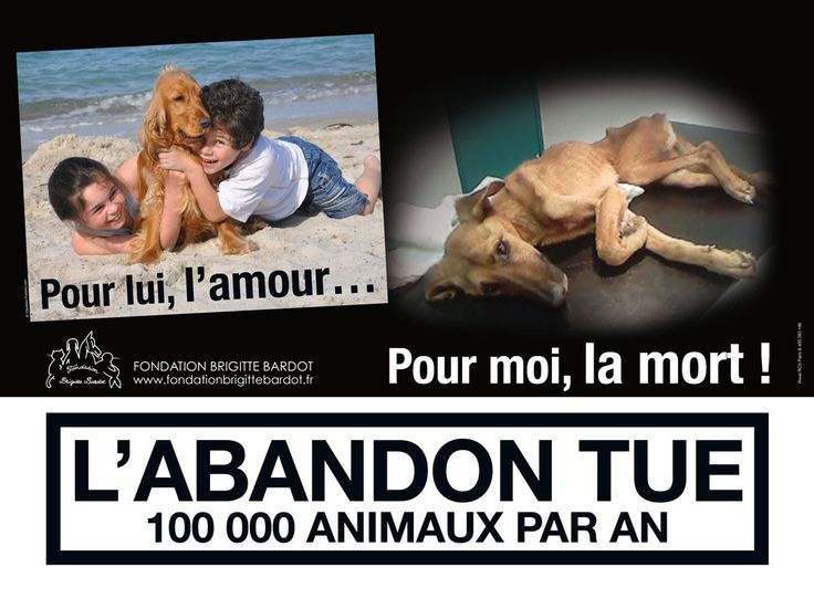 N'abandonnez pas ! | Fondation Brigitte Bardot (against animal abandonment)