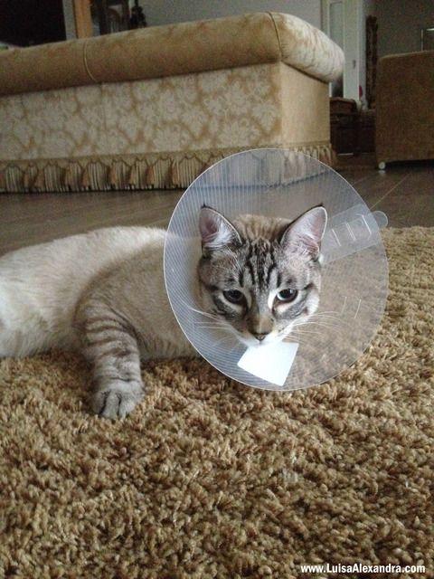 Bartolomeu ferida photo IMG_6545-copia.jpg
