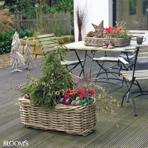 bepflanzungen f r balkon und terrasse im winter weihnachtsdekoration pinterest bepflanzung. Black Bedroom Furniture Sets. Home Design Ideas