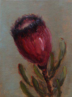 Protea #197