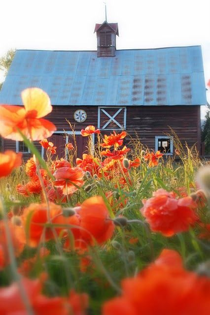 barn through poppies: Lace Jewelry, Charms, Farms, Colors Palettes, Poppies, Orange Flowers, Red Barns, Green Onions, Old Barns
