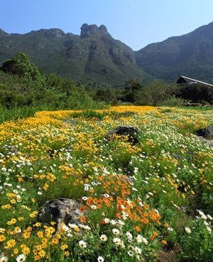 The Kirstenbosch National Botanical Gardens form part of the Cape Floristic Region Protected Area that was proclaimed a UNESCO World Heritage Site in 2004.