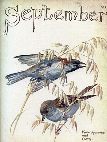 September ~  Artist/Naturalist Edith Holden