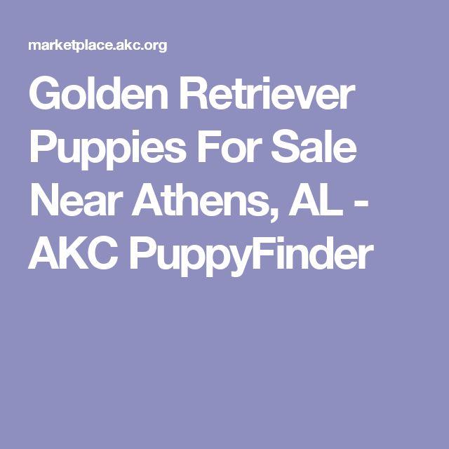 Golden Retriever Puppies For Sale Near Athens, AL - AKC PuppyFinder
