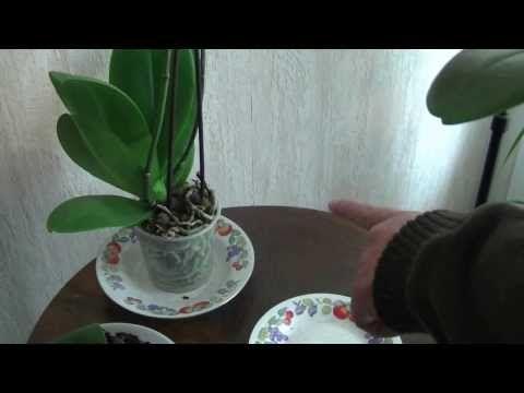 Il nous révèle tous ses secrets pour faire refleurir une orchidée, qui ne fleurissait plus! - Trucs et Astuces - Trucs et Bricolages