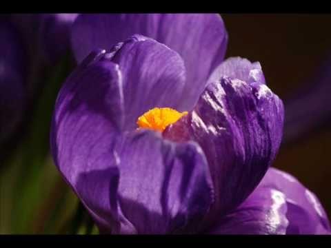 Κωστής Μαραβέγιας - Πάρε χρώμα - YouTube