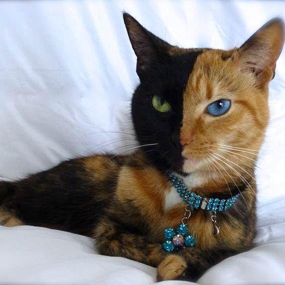 Há gatos, e há gatos famosos na Internet. Para tal basta que um dos meus amigos seja fofinho o suficiente para ser uma estrela, e sempre merecida! Mas quando busco na Internet, o gato mais famoso salta logo à vista: o Grumpy Cat, com mais de 2.3 milhões de seguidores no Twitter e Facebook. Não posso deixar de referir que existe um gatinho musical que não é bem real, que se chama Nyon Cat, e que também tem mais de 2.3 milhões de seguidores! O gato Sockington de Massachusetts é real, mas tem…