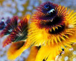 Resultado de imagen para polipos marinos