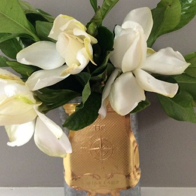Wonderful Gardenia Flowers U0026 Boxes For Sale