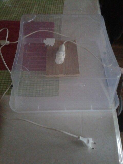 lichtbak gemaakt van een plastic bak een fitting en een snoertje. Idee op gedaan hier op pinterest.