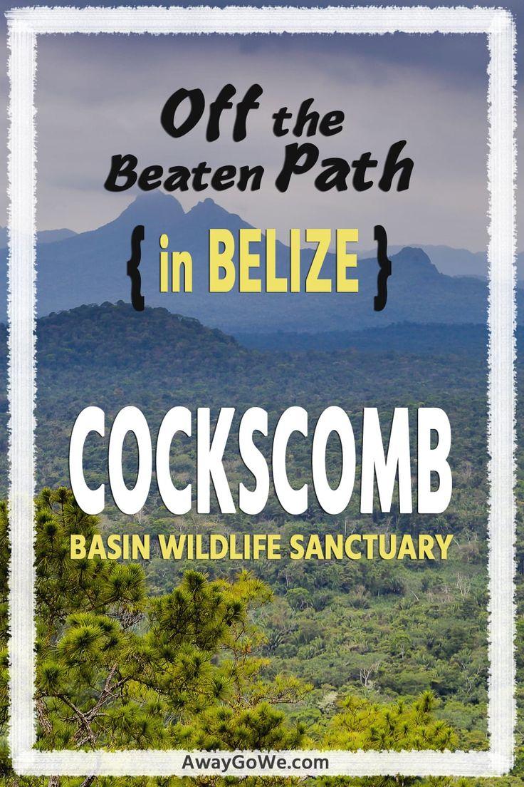 Off the Beaten Path in Belize: Cockscomb Basin Wildlife Sanctuary.
