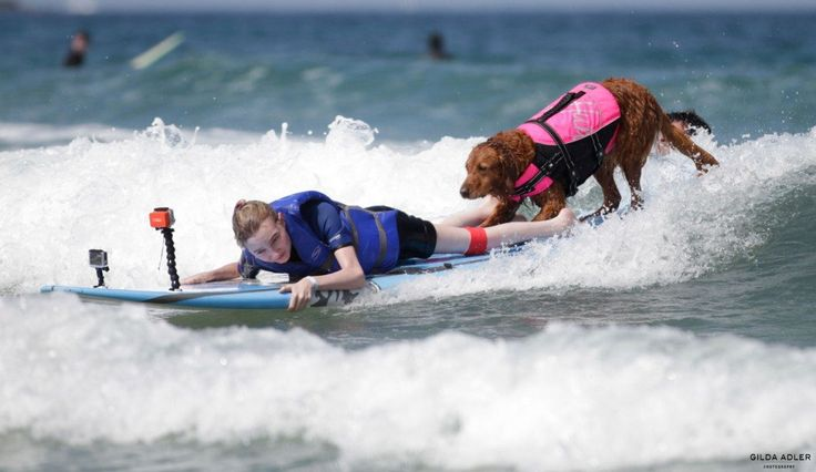 Although Ricochet the surfing dog is already pretty famous, she's really hitting the big time. She's starring in an IMAX film called Superpower Dogs