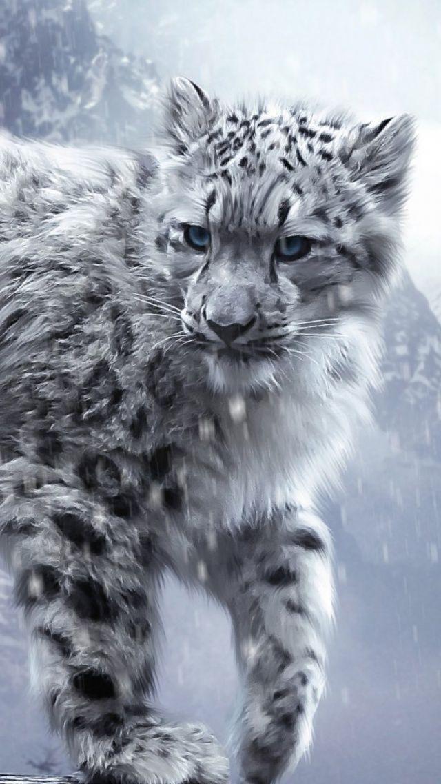White Snow Leopards