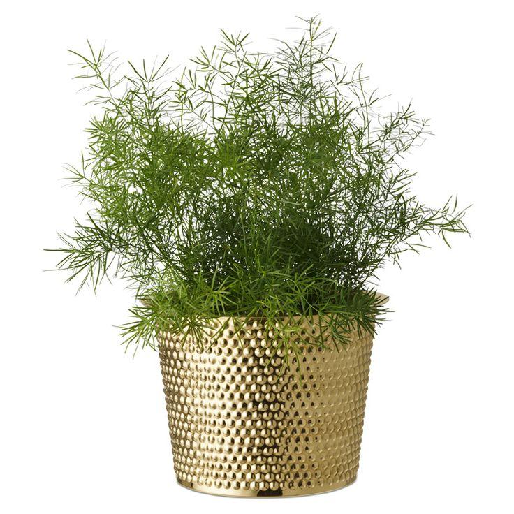 Pot Hortus Brass