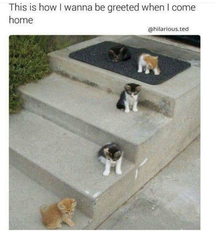 80 Today's Most Funny Memes #130