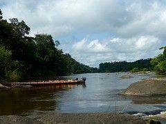Af en toe een Macro adventure :-) : Vier dagen in het tropisch regenwoud in Centraal Suriname: Volzberg aan de Coppenamerivier