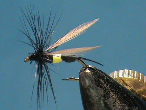 Wasp - Bee's are an often overlooked terrestrial pattern, but an important part of the trouts diet. Once in the water the bee is very vulnerable to fish. - fly fishing video channel - Global FlyFisher
