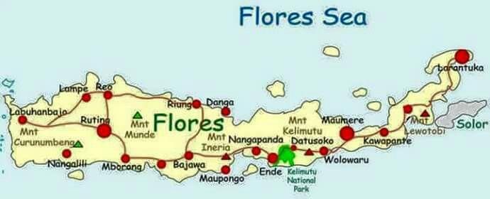 Flores i love