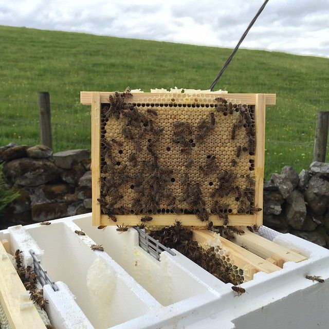 15 A Frames I D Like To Visit: 53 Best Queen Rearing Images On Pinterest