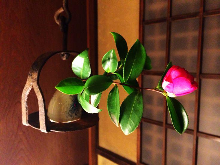 俵屋さんの廊下にて、ハッとするような美しさに出会いました。 beauty tsubaki♡