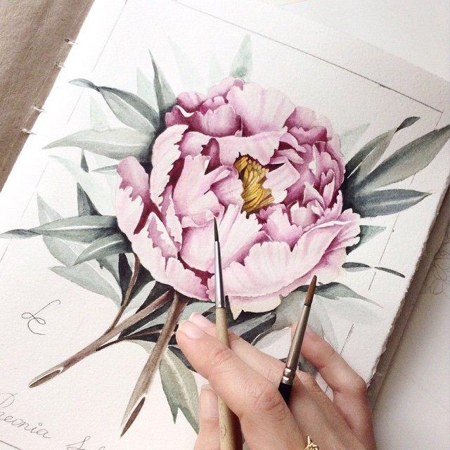 Finished. Quick botanical illustration. Tree peony (Paeonia suffruticosa)    #limkina_art #limkina    Winsor&Newton watercolor, Kolinsky sable paintbrushes, Torchon paper    Древовидный пион. Быстрая ботаническая иллюстрация с натуры