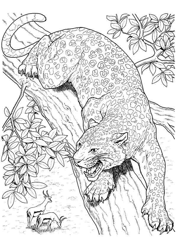 10 Best Jaguar Coloring Pages For  Little Ones