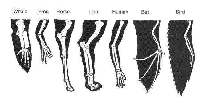 whale frog horse lion human bat bird via Wunderkammer, a curiousity cabinet of (un)natural wonders