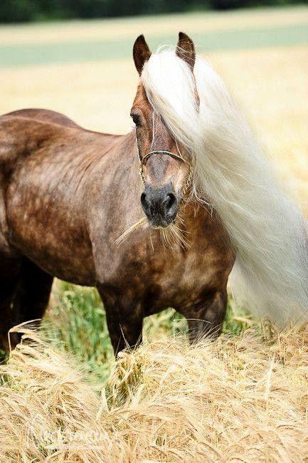 3223 besten s e pferde ponys bilder auf pinterest sch ne pferde pferde und pferdefotografie. Black Bedroom Furniture Sets. Home Design Ideas