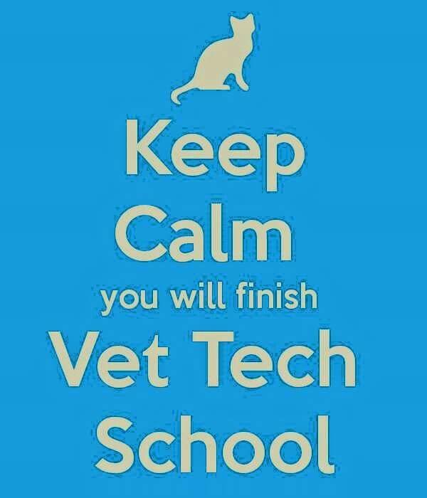 Best Vet Tech Images On   Veterinary Medicine Vet