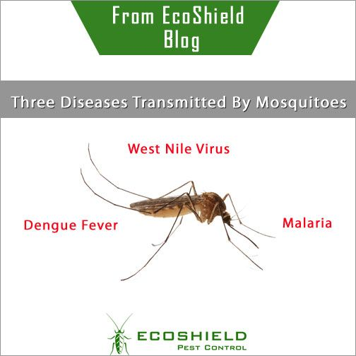 Three Diseases Transmitted By Mosquitoes #WestNileVirus #Malaria #DengueFever #Ecoshield