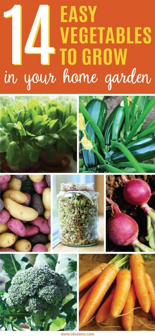 The 14 Easiest Vegetables To Grow Easy Vegetables To Grow