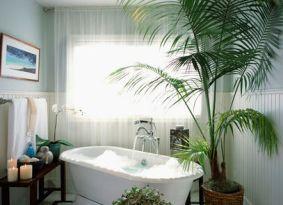 Bathroom Plants 27 best bathroom plants images on pinterest | plants, bathroom